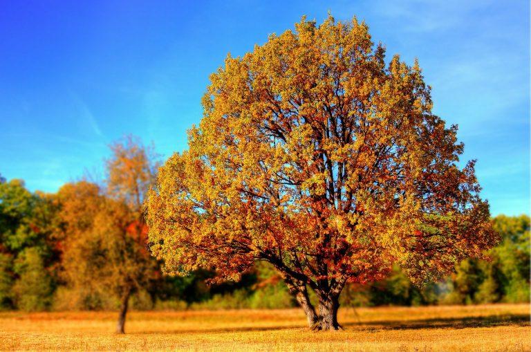 Prognozy na wrzesień